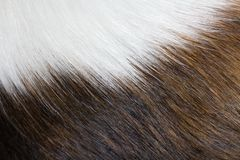 Texture of dog fur Stock Photo
