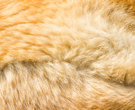 Texture of dog hair royalty free stock image