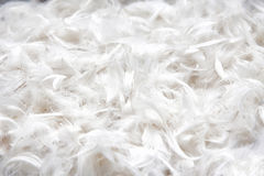 Texture douce et douce de plumage d'oiseau pour l'oreiller photographie stock libre de droits