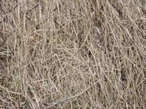 Natural dried grass texture. Natural background Royalty Free Stock Image