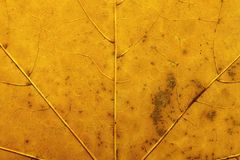 Texture of the dried leaf Royalty Free Stock Photo