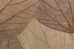 Texture of dried leaves close-up. Background. Texture of dry leaves close-up. Spring background stock photos
