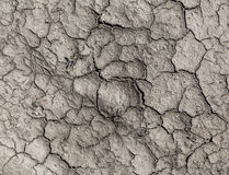 Texture drought parched earth Stock Photography