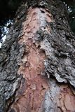 Texture of dry bark royalty free stock photography