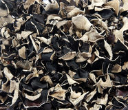 Texture from the dry black Chinese mushrooms. Background Stock Photography