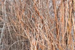Texture of dry branches. stock photo