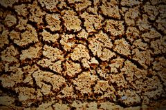 Texture of dry crack soil Stock Images