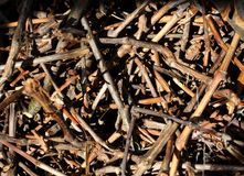 Texture of dry cut vine brushwood in mess pile Stock Photo