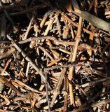 Texture of dry cut vine brushwood in mess pile Stock Image
