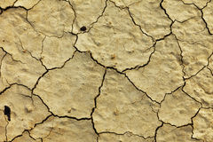Texture dry dirt close up Stock Photography
