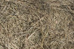 Texture of dry grass, hay. stock image
