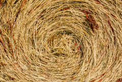 The texture of dry grass. Texture of dry grass twisted in a spiral round a ruck royalty free stock photo
