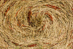 The texture of dry grass. Texture of dry grass twisted in a spiral round a ruck royalty free stock images