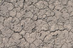 Cracked dry gray ground, texture. The texture of dry ground, closeup Stock Photos