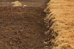 Texture of dry land, drought autmn Stock Photo