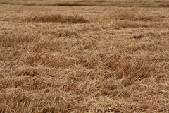 Texture of dry land, drought autmn Royalty Free Stock Image