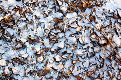 Texture of dry leaves and grass under the fresh snow Royalty Free Stock Photography