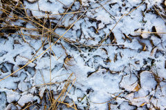 Texture of dry leaves and grass under the fresh snow Royalty Free Stock Photos