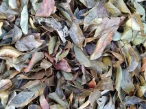 Texture of dry leaves pile. Dried leaves texture royalty free stock photography