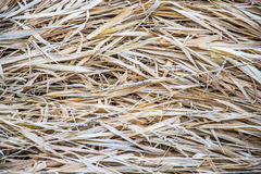 The texture of dry old grass. Royalty Free Stock Photos