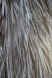 Texture of dry palm leaves Royalty Free Stock Image