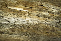 Texture of a dry piece of wood Stock Images