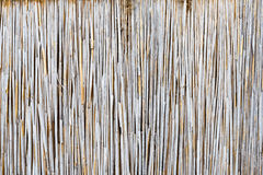 Texture of the dry reeds Royalty Free Stock Photos