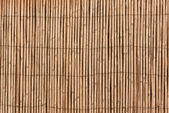 The texture of the dry reeds.  A fence made of reeds. Royalty Free Stock Images