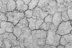 TEXTURE DRY Royalty Free Stock Images