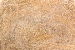 Texture of dry straw. On farmland as a background royalty free stock images
