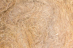 Texture of dry straw. On farmland as a background royalty free stock image