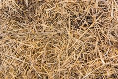 Texture of dry straw on farmland as a background. Texture, dry, yellow royalty free stock photography