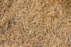 Texture of dry straw on farmland as a background. Texture, dry, yellow stock photo