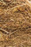 Texture of dry straw Royalty Free Stock Photos