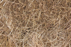 Texture of dry straw Stock Image