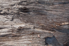 Texture of dry tree trunk Royalty Free Stock Photo