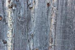 Texture du bois Images stock