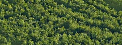 Texture du nord de forêt Photos libres de droits