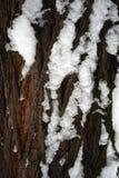 Texture du ` s de tronc d'arbre avec la neige image libre de droits