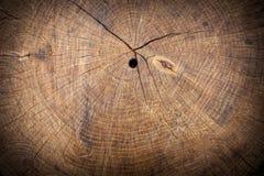 Texture du tronçon en bois Photos libres de droits
