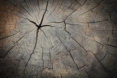 Texture du tronçon en bois Photographie stock libre de droits