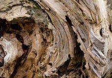 Texture du vieux tronçon d'arbre putréfié Photographie stock