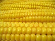 Texture Ears Of Corn Royalty Free Stock Photo