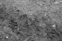 Texture of earth with garbage and footprints. Texture of wet earth with garbage and footprints. Horizontal black and white background royalty free stock photos