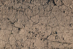 The texture of the earth with the germs.  Royalty Free Stock Photography