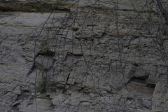 Texture of the earth, grass, roots wood. Background layer below the ground with roots that dug the wells of drought on agriculture stock images