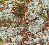 Texture of the earth and moss. Texture of moss grass and fallen leaves stock image