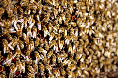 Texture effectuante occupée de miel d'abeilles de miel Photos libres de droits