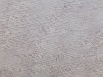 Texture elephant Royalty Free Stock Images
