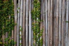 Texture en bambou de barrière pour le fond photographie stock libre de droits